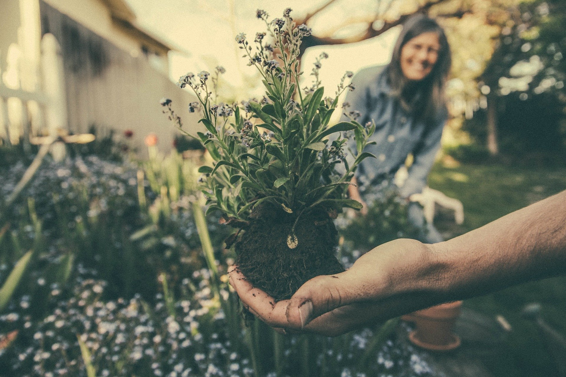 Landscaping Gardening And Yard Work For Your Health